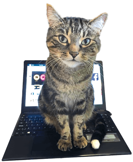 cat-on-computer-transpk